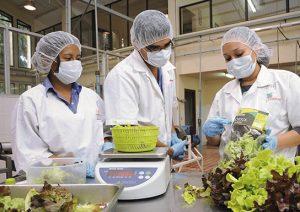 técnico en agroindustria alimentaria sena