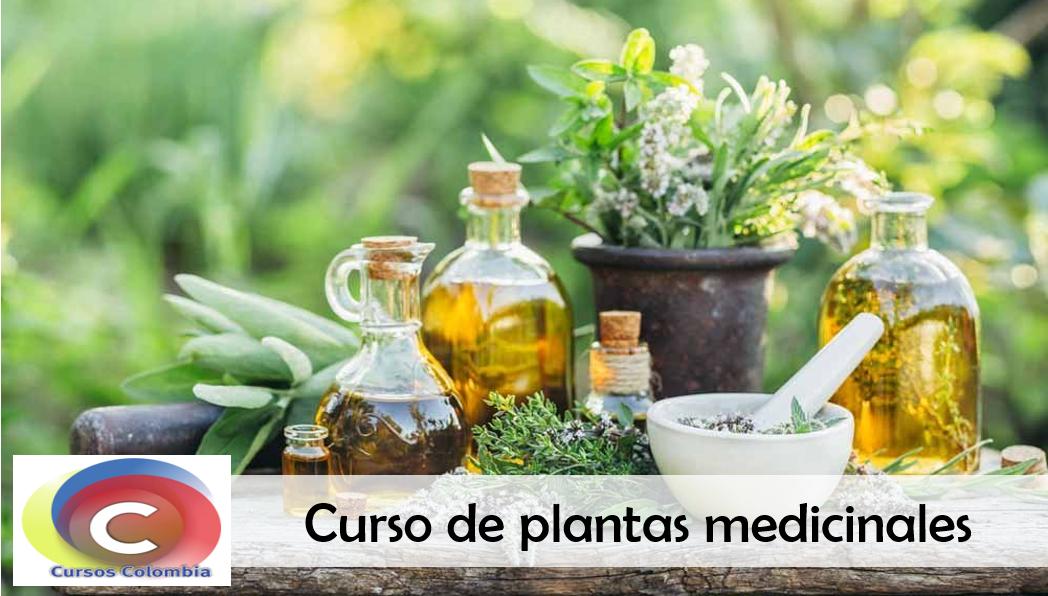curso de plantas medicinales sena
